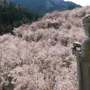 枝垂れ桜のまち・神山より