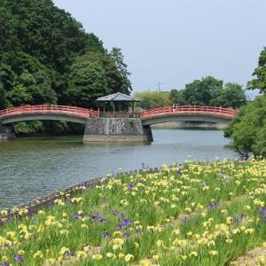 亀鶴公園の開花状況②