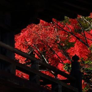 【徳島最古】大山寺の紅葉