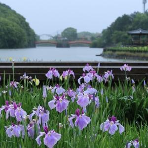 亀鶴公園の開花状況