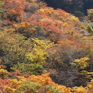 WOC登山部2020.10.14 剣山(単独)