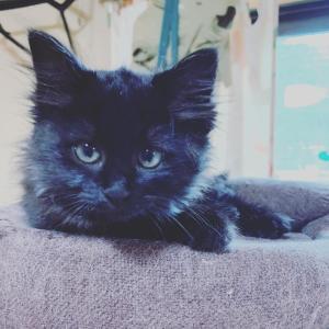黒猫 保護の経緯
