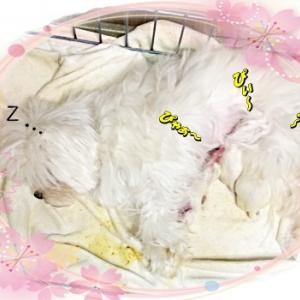 ベッキーの出産≪続き≫