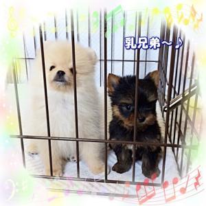 仲良し乳兄弟♪(動画2連発)