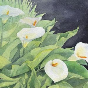 白が美しいカラーを描く