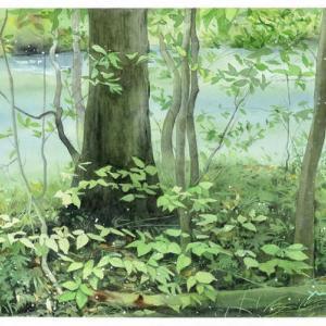 奥入瀬・川辺の緑