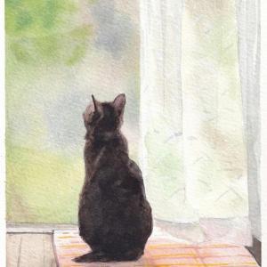 窓辺で黄昏る猫