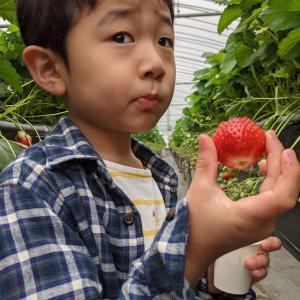野菜ソムリエ母とイチゴ狩り