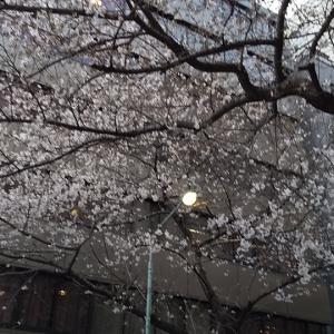 ☆桜からつつじ☆