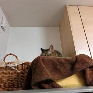 私も冷蔵庫の上