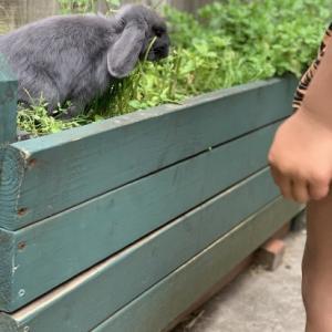 家の中を自由に生活するウサギ