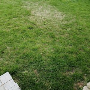 【家庭菜園】芝刈り