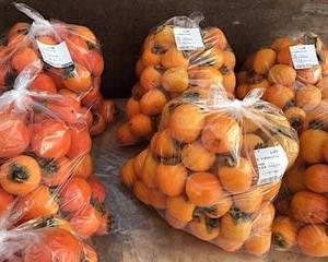 柿の季節?