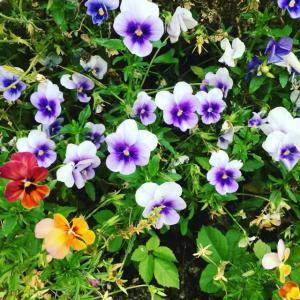 花より団子だけど、花も癒されます💕