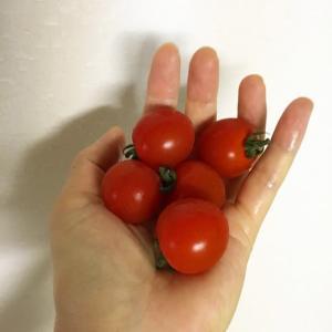 ミニトマトの一個が🍅