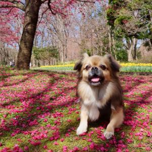 桜満開で春が来たのに