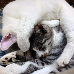 冬にお借りしたい猫マフラー
