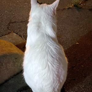 猫を呼び寄せる女〜焼きまんじゅうのタレを美味しくリメイク〜