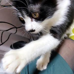 なぜ猫は紐が好きなんだろう?