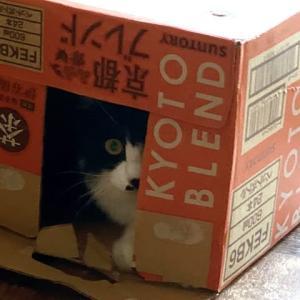 どうしても猫は段ボールに入ってしまう性