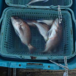 三浦・城ケ島の海上釣堀に行ってました。
