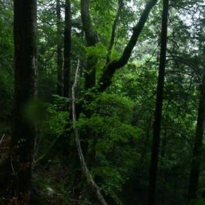 田立の滝周辺の森