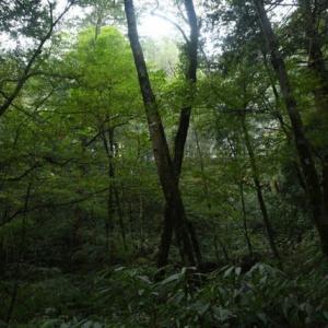 アライダシ自然観察教育林