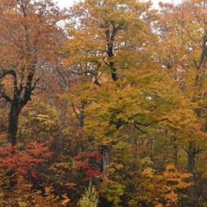 紅葉の天生を歩く