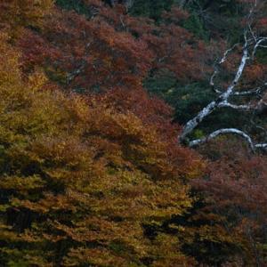 神坂大檜周辺の紅葉