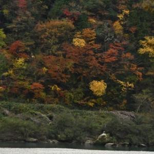 木曽川沿いの紅葉を見て思ったこと