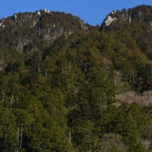 南木曽岳の森