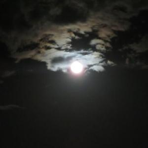 月に叢雲、花に風