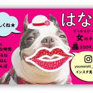 【新作★ペット名刺】可愛いペットの写真を入れたペット用の名刺が登場♪