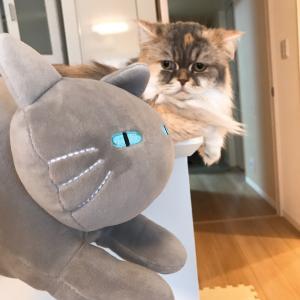 見知らぬ猫との遭遇