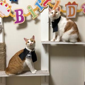 """""""ハロウィンズ Birthday!!"""""""