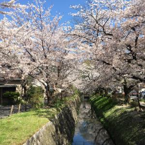桜、葉桜、鶯の声