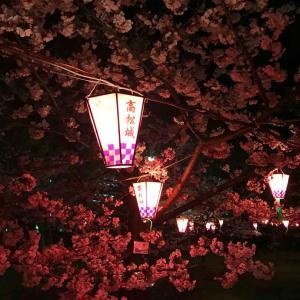 玉藻公園の夜桜
