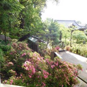 本屋親父のつぶやき  令和  2年  6月15日 梅雨明けの様なお天気です。