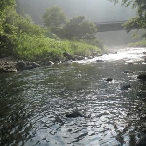 8月1日 超渇水のホーム河川で鮎釣り!