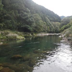 亀尾島川の鮎 2021 10 17