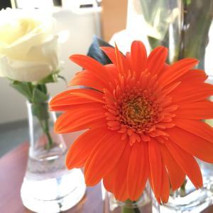 今週のお花 iPhoneバージョン Kawanishi撮影です