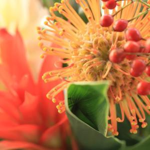 今週のお花一眼レフバージョンブログアップ版です。秋の花って感じかなあ。