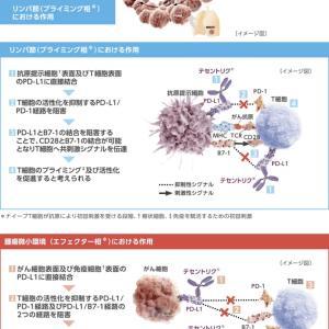 PD-L1ヒト化モノクローナル抗体(PD-L1:Programmed Death-Ligand 1):アテゾリズマブ(遺伝子組換え)とベバシズマブ(遺伝子組換え)療法 切除不能肝がんに
