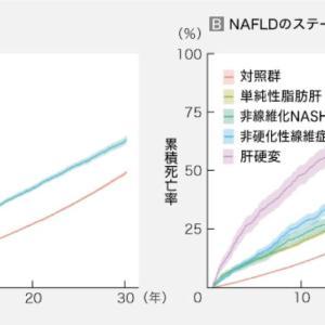 NAFLDは軽度でも死亡リスクを上昇って 確かにあり得る話しです メディカルトリビューンから