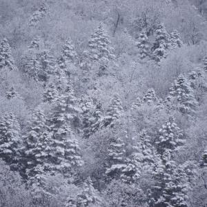 おんねゆの雪景色 PENTAX K70