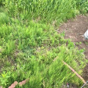 庭の草むしりー