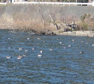 余呉湖 ワカサギ釣り 少し残念なお知らせ。川並桟橋 営業時間変更。江土は終了。