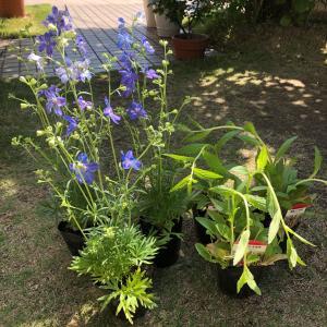 花壇の模様替え