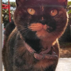 迷子猫です!!