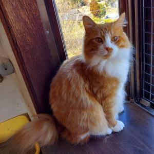 保護猫お届け!のご報告です